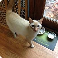 Adopt A Pet :: Baby - Greensboro, GA