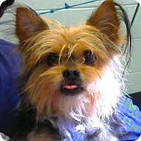 Adopt A Pet :: Aloe-Adopted - Decatur, GA