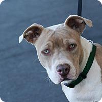 Adopt A Pet :: Banjo - Palmdale, CA