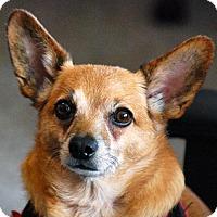 Adopt A Pet :: Pippin - Arlington, VA