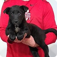 Adopt A Pet :: Moose - Gahanna, OH