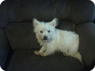 Jill   Adopted Dog   H...