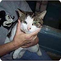 Adopt A Pet :: Rex - Jenkintown, PA