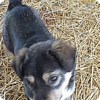 Adopt A Pet :: Faris (PENDING!) - Chicago, IL