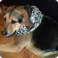 Adopt A Pet :: Sasha - Hamilton, ON