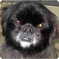 Adopt A Pet :: Parker - Mays Landing, NJ