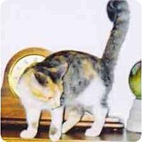 Adopt A Pet :: Lotus - Fayette, MO