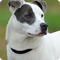 Adopt A Pet :: Kaiser - Dacula, GA