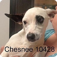 Adopt A Pet :: Chesnee - baltimore, MD