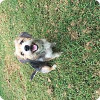 Adopt A Pet :: Charlie - Hampton, VA