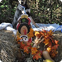 Adopt A Pet :: Molly adoption pending - Manchester, CT
