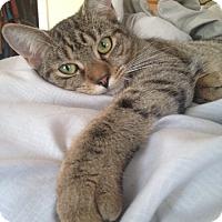 Adopt A Pet :: Jolene - Berkeley Hts, NJ