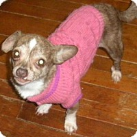Adopt A Pet :: Mabel - Pardeeville, WI