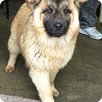 Adopt A Pet :: KINKO - Cadiz, OH