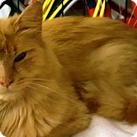 Adopt A Pet :: Petra - brewerton, NY