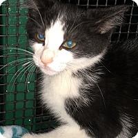 Adopt A Pet :: Matt - Porter, TX