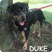 Rottweiler/Labrador Retriever Mix Dog for adoption in Batesville, Arkansas - Duke