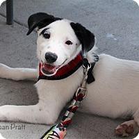 Adopt A Pet :: Jeff - Bedford, VA