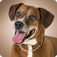 Adopt A Pet :: Kurt - Prescott, AZ