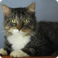 Adopt A Pet :: Sebastian - Winchendon, MA