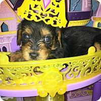 Adopt A Pet :: Simone Manuel - Houston, TX