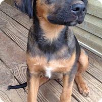 Adopt A Pet :: Rowlf - New Oxford, PA