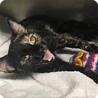 Adopt A Pet :: Sereena - Voorhees, NJ