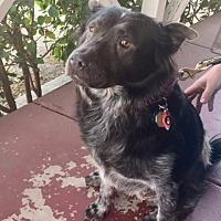 Adopt A Pet :: GiGi - Rancho Palos Verdes, CA