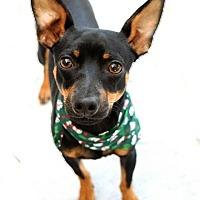 Adopt A Pet :: Bear - Dublin, CA