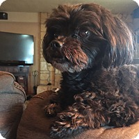 Adopt A Pet :: KOCO - Gustine, CA