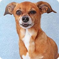 Adopt A Pet :: Ranger - Encinitas, CA