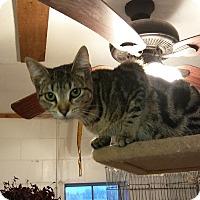 Adopt A Pet :: Dazzle - Glenpool, OK
