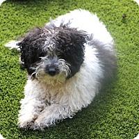 Adopt A Pet :: Pockets - Woonsocket, RI