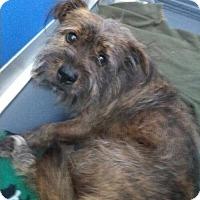 Adopt A Pet :: Rusty - Oakland Park, FL