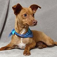 Adopt A Pet :: Bobby Mac - Kerrville, TX