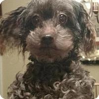 Adopt A Pet :: Katie - Centreville, VA