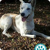 Adopt A Pet :: Ziva - Kimberton, PA
