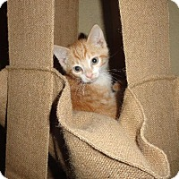 Adopt A Pet :: Elden - Glendale, AZ