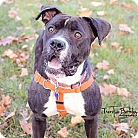 Adopt A Pet :: Twinkie - Chicago, IL
