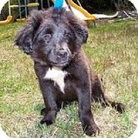 Adopt A Pet :: Millie Mae - Staunton, VA