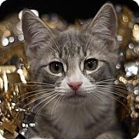 Adopt A Pet :: Stella - Sacramento, CA
