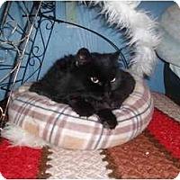 Adopt A Pet :: Mandy - Hamburg, NY