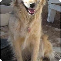 Adopt A Pet :: Annie 2 - Golden Valley, AZ