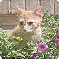 Adopt A Pet :: Mandarin - Colmar, PA