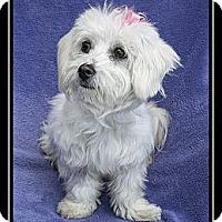 Adopt A Pet :: Lulu - Ft. Bragg, CA