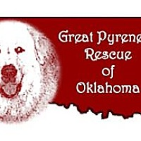 Adopt A Pet :: Foster Homes Needed - Oklahoma City, OK