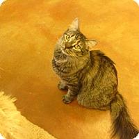 Adopt A Pet :: Kaitlyn - Lake Charles, LA