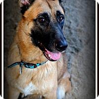 Adopt A Pet :: Tanga - Phoenix, AZ