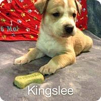 Adopt A Pet :: Kinglsee - Broken Arrow, OK