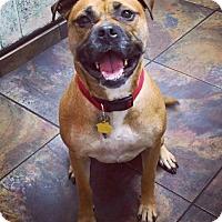 Adopt A Pet :: Georgia - Holly Springs, NC